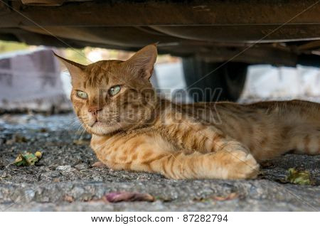 Cat lying in the street among the leaves