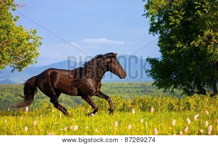 Bay Horse Jumps On A Green Summer Meadow Against Mountains