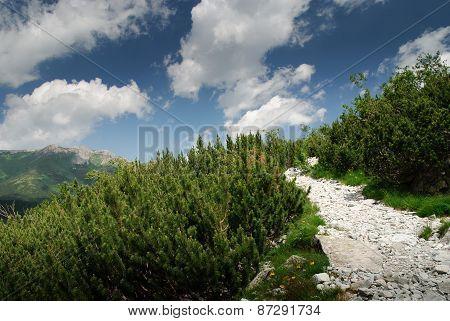 Rough Alpine Pathway