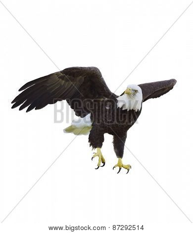 Digital Painting Of American Bald Eagle