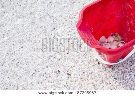 Collecting Seashells on a Beach