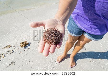 Woman Holding a Dead Sea Urchin