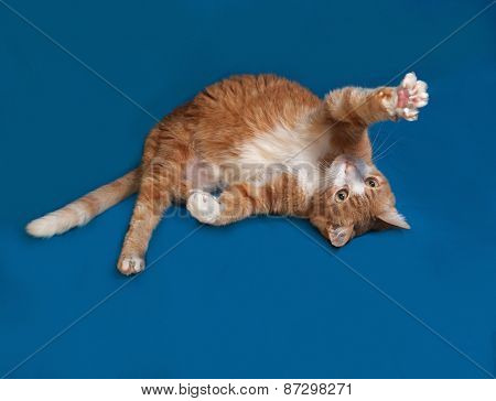 Red And White Cat Tumbles On Blue