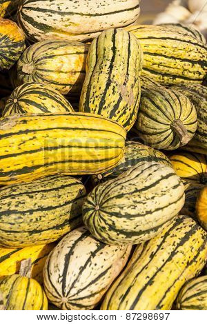 Delicata Sweet Potato Cucurbita Pumpkin Pumpkins From Autumn Harvest
