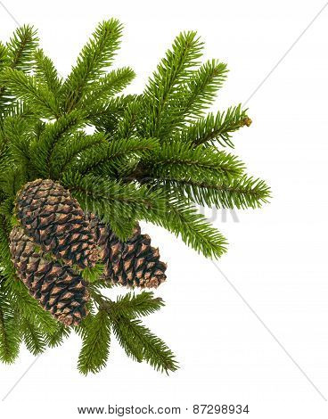 Green Branch Of Christmas Tree With Cones Isolated On White