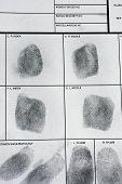 picture of fingerprint  - Real human fingerprint on police fingerprint card - JPG