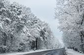picture of polonia  - Winter road lined with trees in Poland - JPG