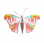 stock photo of flying-insect  - Colored summer butterfly flying illustration on white  - JPG