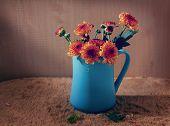 pic of chrysanthemum  - still life flowers Chrysanthemum in blue vase - JPG
