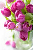 stock photo of vase flowers  - beautiful purple tulip flowers in vase  - JPG