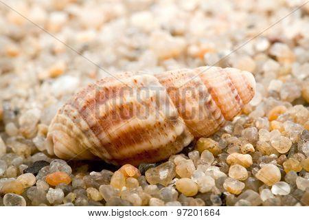 Sea Cockleshell On Beach Sand