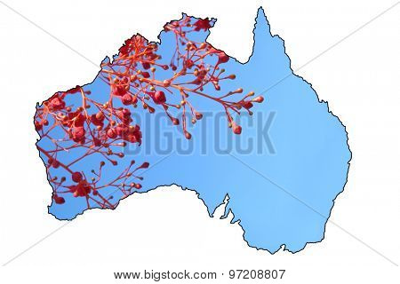Map of Australia with Illawarra Flame Tree Buds