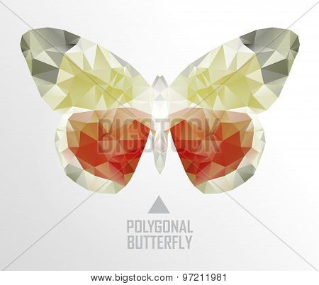Color butterfly flying
