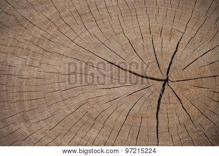 Brow Cut Wood