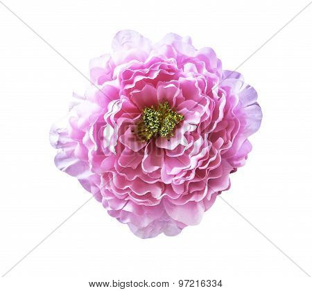 Pink Artificial Flower On White