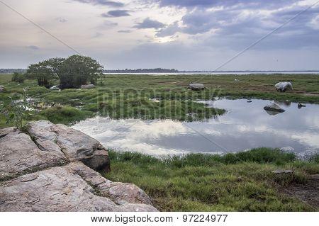 Arugam Bay Lagoon Landscape, Sri Lanka