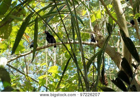 Talking birds in a tropical garden. Philippines. The island of Palawan.