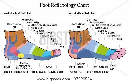 Foot Reflexology Side Profile Lateral Medial View
