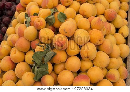 Fresh Apricots In A Market.