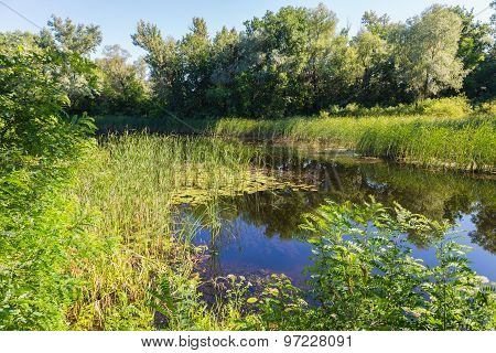 Summer Landscape On  Forest Lake With Water Lilies And Reeds .