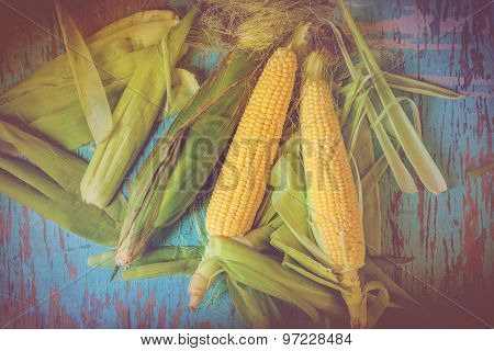 Freshly Picked Ear Of Maize, Sweet Corn Cob