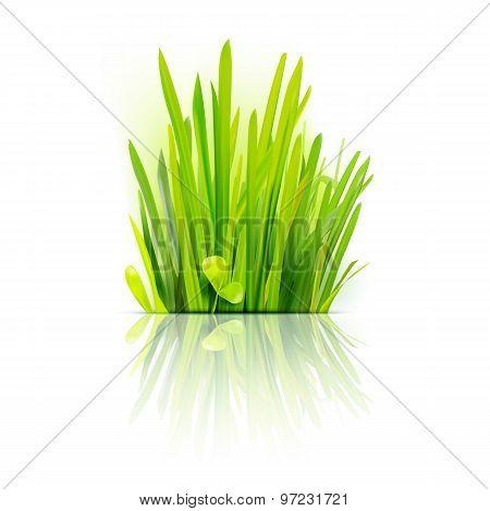 Realistic Grass Design Element