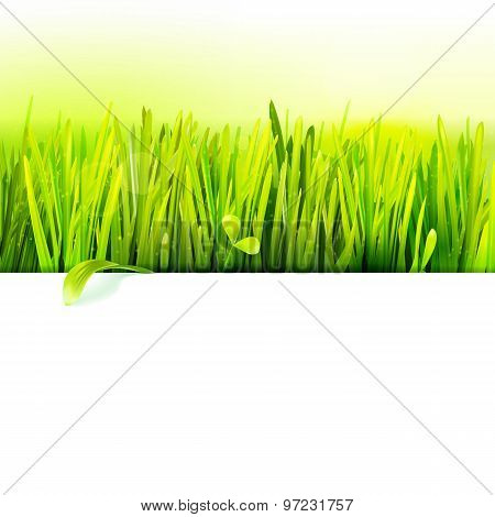 Realistic Grass Frame