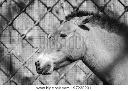 Muzzle Of A Horse Gray Color Sideways In Profile