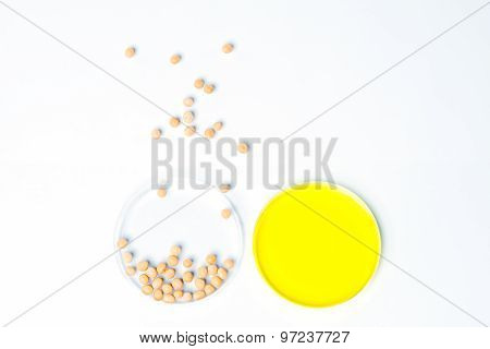 Soybean Genetically Modified, Plant Cell, Petri Dish