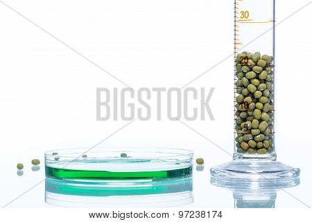 Mung Bean Genetically Modified, Plant Cell