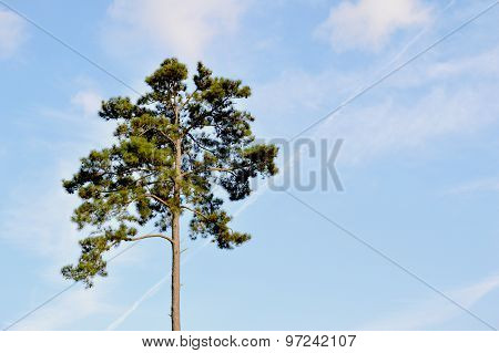 Tree with blue sky