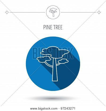 Pine tree icon. Forest wood sign.