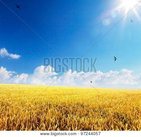 Art Backdrop Of Ripening Ears Of Yellow Wheat Field