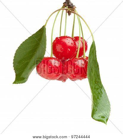 Cherry Brunch