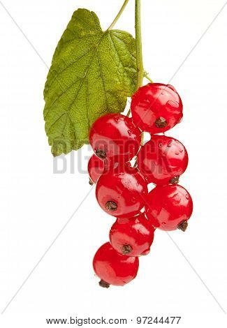 Macro Of Red Currant Bunch With Leaf