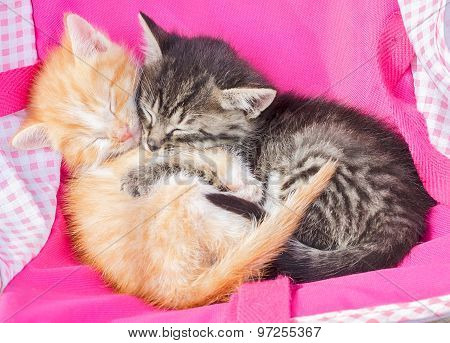 Red And Gray Kitten Sleeping Together