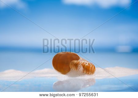 nautilus shell in foam on wet white glass with reflection, shallow dof