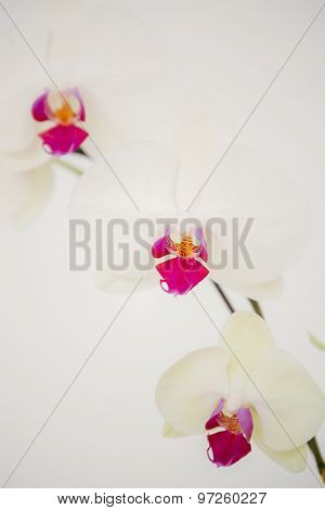 A delicate stem of pink flower on a white background