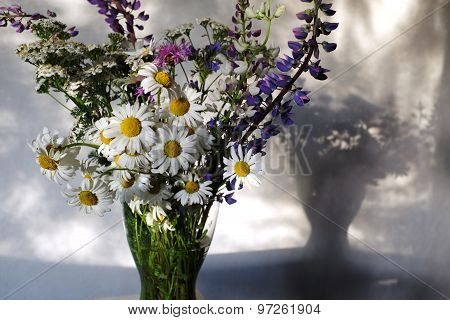 Pleven Flowers, Lupines And Daisies In A Vase