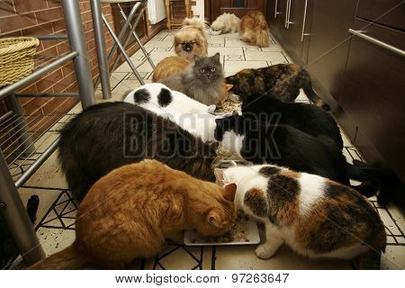 Many Cats And Little Dogs Eating Together