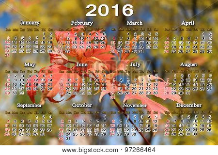 Calendar For 2016 With Red Maple Leaves
