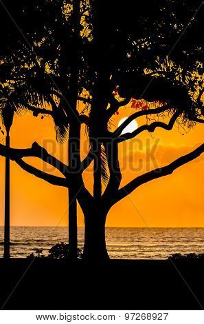 Palm and tropical trees silhouette on sunset tropical beach. Vacation background.