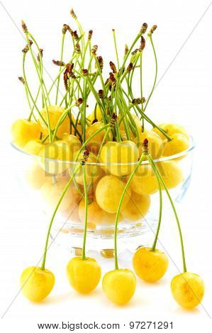 White cherries in bowl isolated