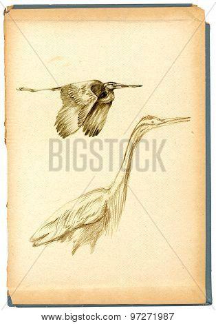Pencil Drawing, Sketch - Bird, Herons