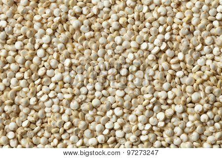 Raw Quinoa seeds full frame close up