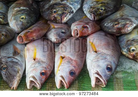 Red Snapper On Ice In The Market