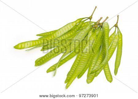 Green Seed Of Lead Tree Or Wild Tamarind