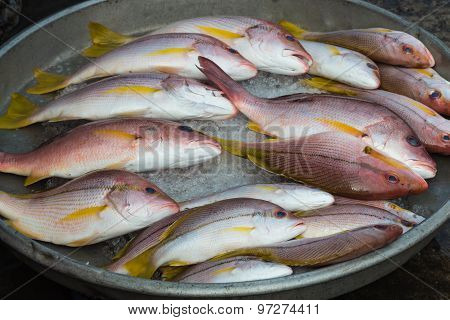 Several Fresh Red Snappers