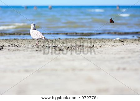 Butterfly at the Beach