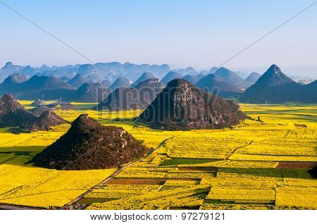 Beautiful landscape rapeseed field or canola flower field in spring, Luoping in China